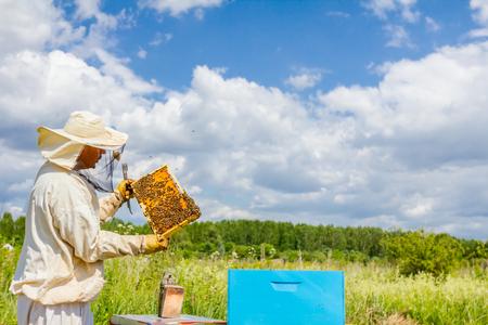 Imker houdt houten frame met bijen omhoog om situatie in bijenkolonie te controleren.