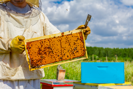 Beekeeper is holding closed up honeycomb full with honey on wooden frame. Imagens - 93989790
