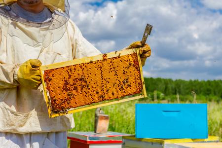 Imker houdt gesloten honingraat vol met honing op houten frame.