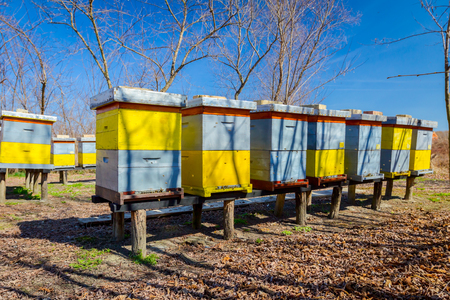 Wooden colorful beehives in a row are placed on wooden construction lifted off the ground. Stock Photo