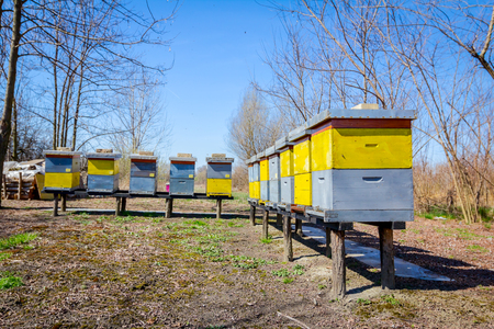 Wooden colorful beehives in a row are placed on wooden construction lifted off the ground. Banco de Imagens