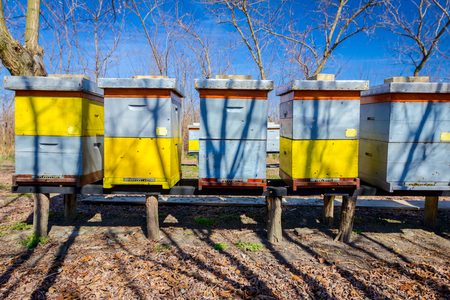 Wooden colorful beehives in a row are placed on wooden construction lifted off the ground. Imagens