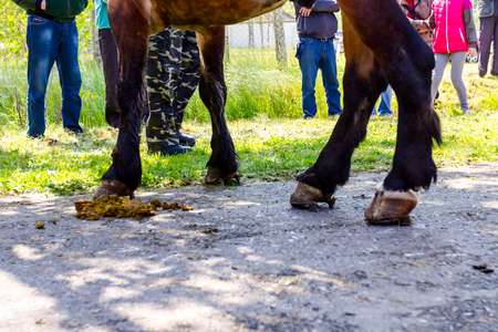Legs of thoroughbred horse with horseshoe on asphalt, people are looking beside the road Stok Fotoğraf