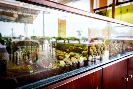 Live exotic and expensive crayfish with tied claws are in aquarium, tank at traditional seafood restaurant for sale. Imagens
