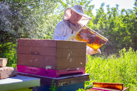 Beekeeper is looking swarm activity over honeycomb on wooden frame, control situation in bee colony. 版權商用圖片