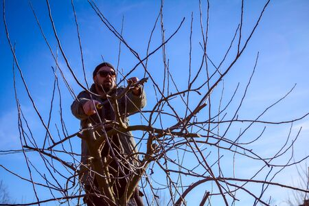 Farmer is pruning branches of fruit trees in orchard using long loppers at early springtime day using ladders.