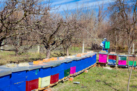 Farmer in protective clothing and gas mask sprays of fruit trees in orchard using long sprayer to protect them with chemicals from fungal disease or vermin at early springtime, near bee colony, apiary.