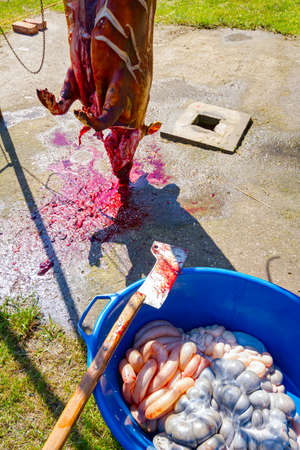 Bloody ax for chopping meat placed on plastic bowl with offal organs, intestines, flesh processing at outdoor butchery.