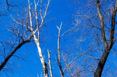The branches of tree stand in front of beautiful blue sky background.