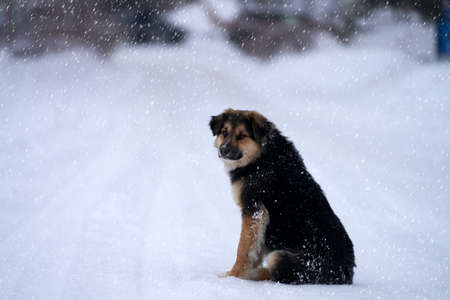 A good-natured street dog is sitting on a snow-covered trail. Snow is falling. Copy space.