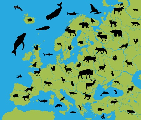 Animals of Europe Stock Vector - 9255093