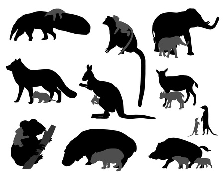 lemur: animal kids