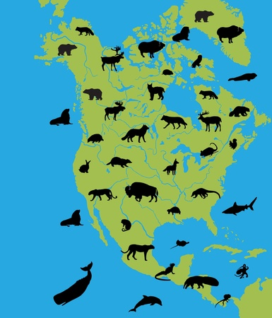 the walrus: Animals of North America