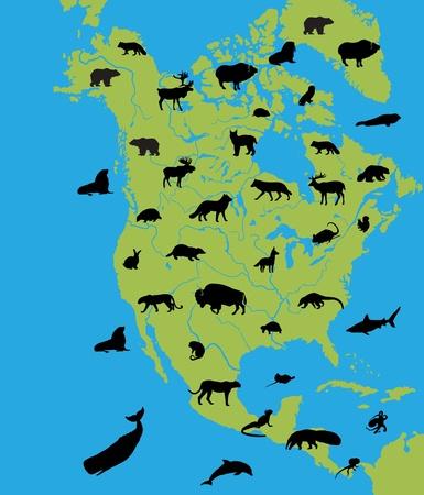 Animaux d'Amérique du Nord