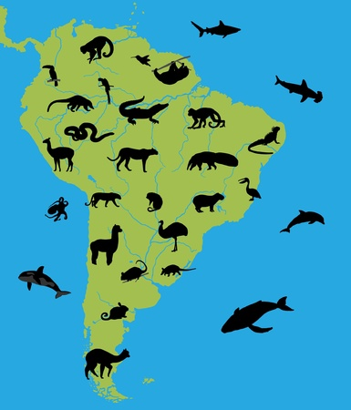Animals of South America Vector