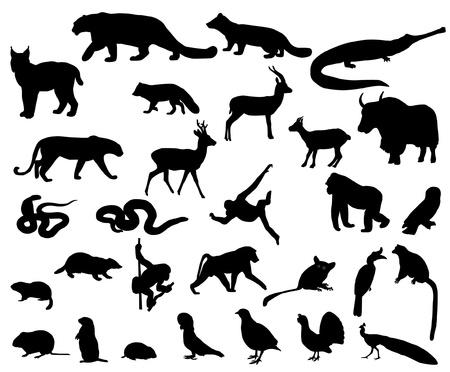 アジアの動物