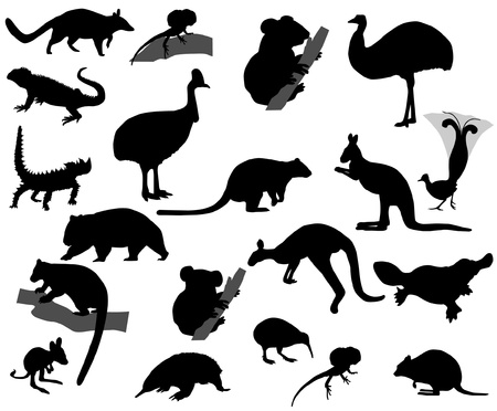 Animals of Australia Illustration