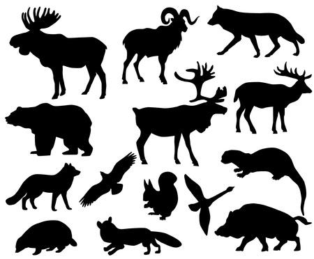 alces alces: Animales de Europa