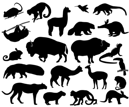 Animals of North and South America Stock Vector - 9553158
