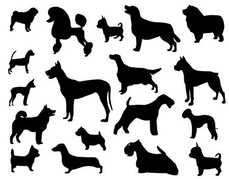 beagle puppy: Perro de raza Vectores