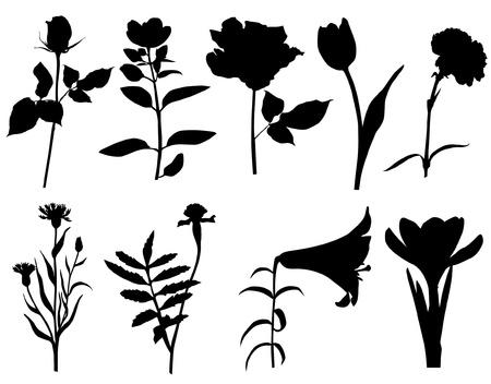 rose silhouette: flower