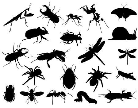 insect Stock Vector - 14846096