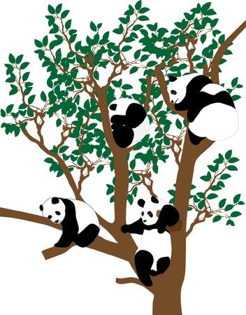 asian family: panda