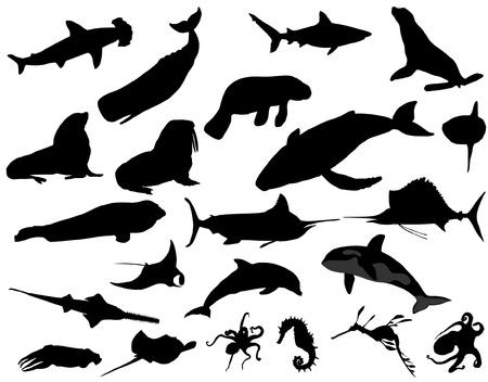 pez espada: sea ??animal Vectores