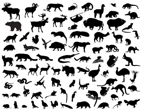 animal silhouette: animal  Illustration