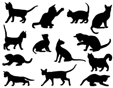 silhouette chat: chat