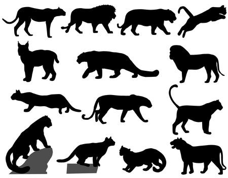 puma: gatti selvatici