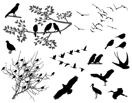 flock of birds: Birds