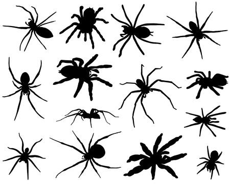 Spinnen Stockfoto - 21925612