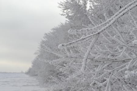 bosk: Winter scenery Stock Photo