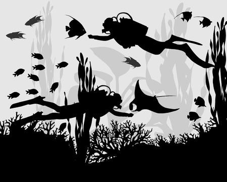 Duiker in koraalrif tussen de vissen en algen Stockfoto - 36565974