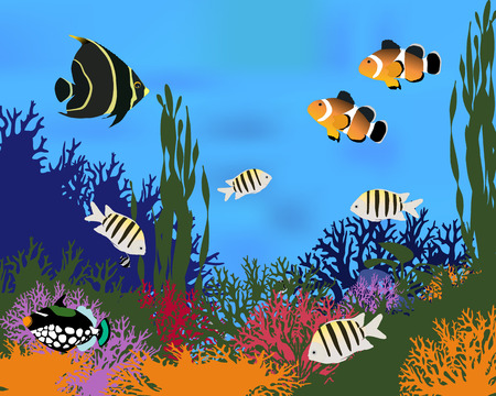 triggerfish: Different species of coral fish. Color vector illustration. Illustration