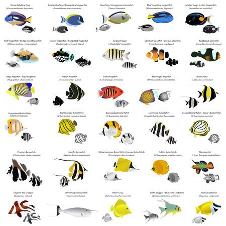 arrecife: Los peces marinos Vectores