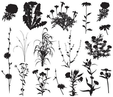 Collectie van silhouetten van verschillende soorten bloemen