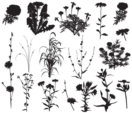 Collection of silhouettes of different species of flowers Ilustracja