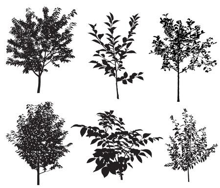 Verzameling van silhouetten van de tuin bomen.