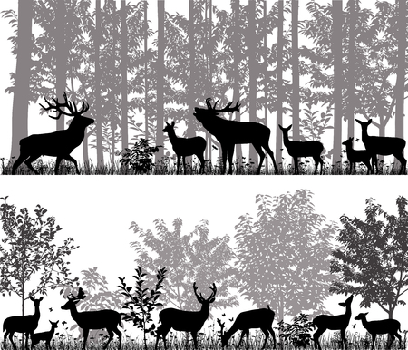 A herd of deer in silhouettes on the background of trees