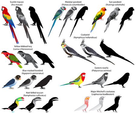 Collection of different species of parrots. Colour and black-and-white vector. Ilustração