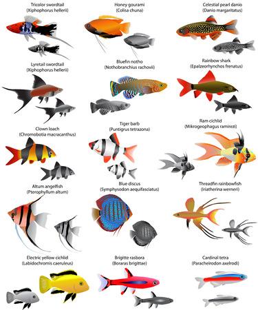Colección de diferentes especies de peces de agua dulce