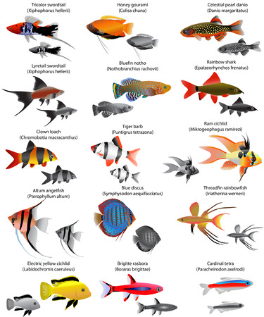 Verzameling van verschillende soorten zoetwatervissen Stock Illustratie