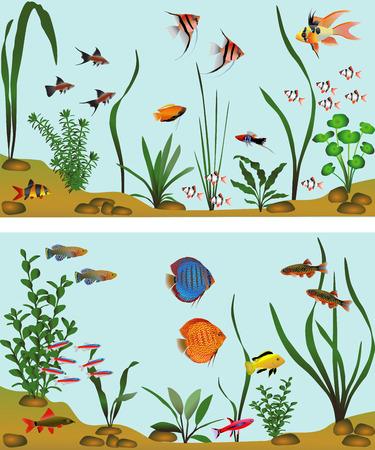 Different species of freshwater fish in aquarium. Color vector illustration. Illustration