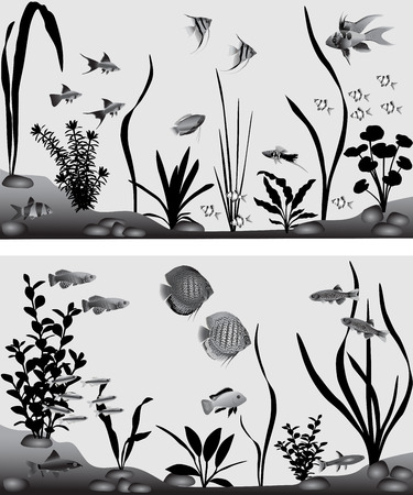 fluvial: Different species of freshwater fish in aquarium. Black-and-white vector illustration.