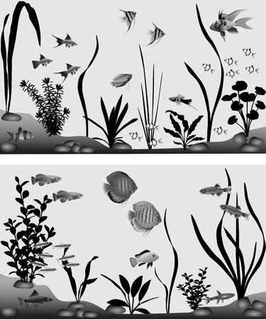 Verschillende soorten zoetwatervissen in aquarium. Zwart-witte vector illustratie.