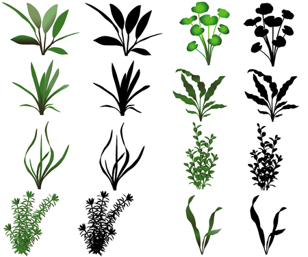 Collection of different species of water plants