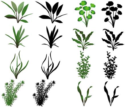 Verzameling van verschillende soorten waterplanten Stock Illustratie