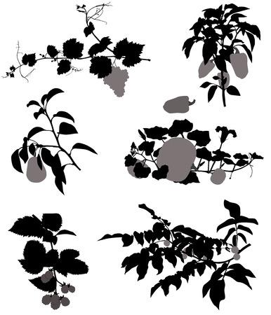 Collectie van silhouetten van druiven, bramen, peer, noten, pompoen en peper Stock Illustratie